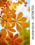 Autumn Leaves Chestnut