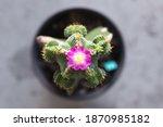 aztekium valdezii cactus with... | Shutterstock . vector #1870985182