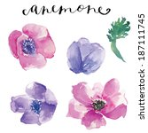 Painted Watercolor Anemone...
