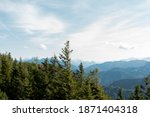green pine forest line in the... | Shutterstock . vector #1871404318