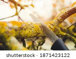 Small photo of Final garden work of autumn. Farmer hand saw and cuts branches of a tree in the garden. Man sawing tree with hand saw. Autumn cut tree close up.