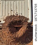 Partly Exposed Ants Nest With...