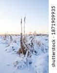 frozen cattail on the river... | Shutterstock . vector #1871909935