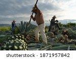 Tequila  Jalisco  Mexico  ...