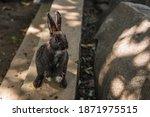 Close Up Cutie Black Rabbit In...