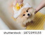 Bathing The Dog In The...