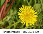 Closeup Bright Yellow Flower...
