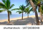 sandy beach with coconut palm...   Shutterstock . vector #1872838048