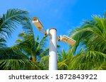 cctv security digital camera...   Shutterstock . vector #1872843922