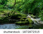 Green moss on stones on a river in the very green forrest with small waterfall.