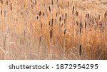 A Marshy Field Of Brown And...