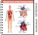 blood flow of the human heart... | Shutterstock .eps vector #1873054615