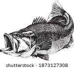 Bass  Micropterus Salmoides....