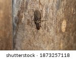 Insects Like Mosquito Flies And ...