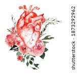 Watercolor Anatomical Heart ...