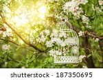 Bird Cage On The Apple Blossom...
