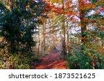 A Beautiful Autumn Landscape...