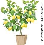 lemon tree in color...   Shutterstock .eps vector #1873535248