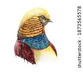 Pheasant Bird Head Watercolor...