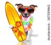 silly funny surfer dog with... | Shutterstock . vector #187359842