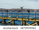 Seagulls And Cormorants On A...