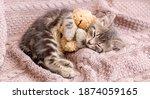 Baby Cat Sleeps On Cozy Blanket ...