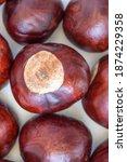 Buckeye Chestnut. Fresh Conkers....