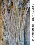 Wood Texture Of Olive Tree...