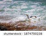 Seagull At De Hoop Nature...