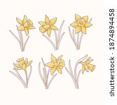 Daffodil Flower Contour Vector...