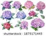 Hydrangea Flowers Set ...