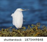 View Of Snowy Egret In Front Of ...