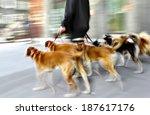 Stock photo walking the dog on the street in motion blur 187617176