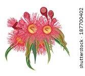 eucalyptus flower realistic... | Shutterstock .eps vector #187700402