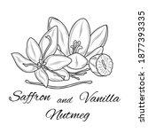 saffron  nutmeg and vanilla....   Shutterstock .eps vector #1877393335