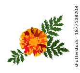 marigold vector stock... | Shutterstock .eps vector #1877538208