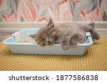 Little Gray Fluffy Kitten...