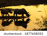 Silhouettes Of Two Rhinos At A...