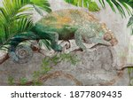 Tropical Leaves And Plants With ...