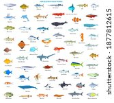 large collection of fishes of... | Shutterstock .eps vector #1877812615