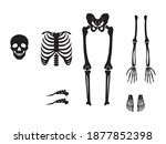set of skeleton with different...   Shutterstock .eps vector #1877852398