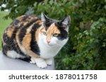 Wonderful Calico Cat Sitting...