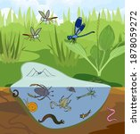 Ecosystem Of Pond. Insects And...