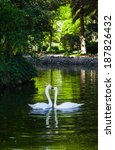 two swans in love | Shutterstock . vector #187826432