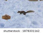 Cute American Squirrel While...