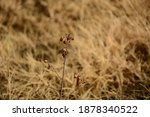 Dry Grass With Blur Background