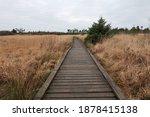 A Boardwalk Crossing A Peat Bog ...