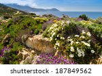 Purple And White Flowers In The ...