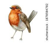 Robin Bird Watercolor...