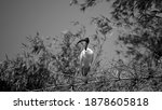 Ranganathittu bird sanctuary...